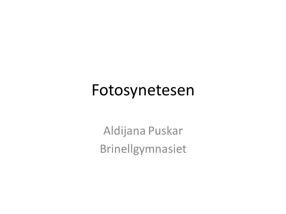 Aldijana Puskar Brinellgymnasiet