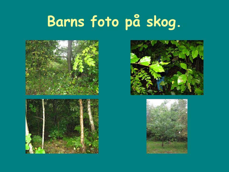 Barns foto på skog.