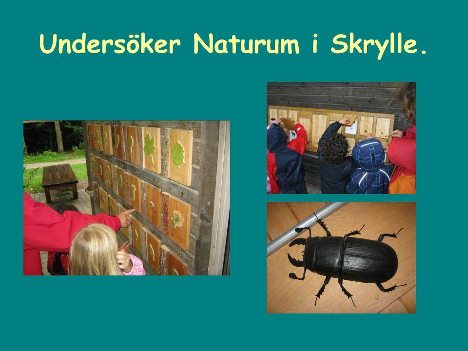 Undersöker Naturum i Skrylle.