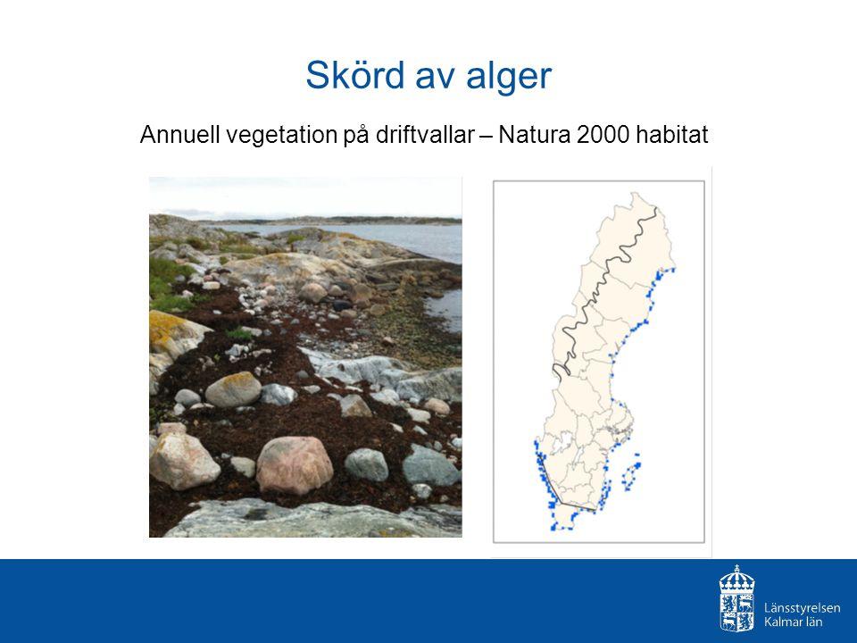 Skörd av alger Annuell vegetation på driftvallar – Natura 2000 habitat