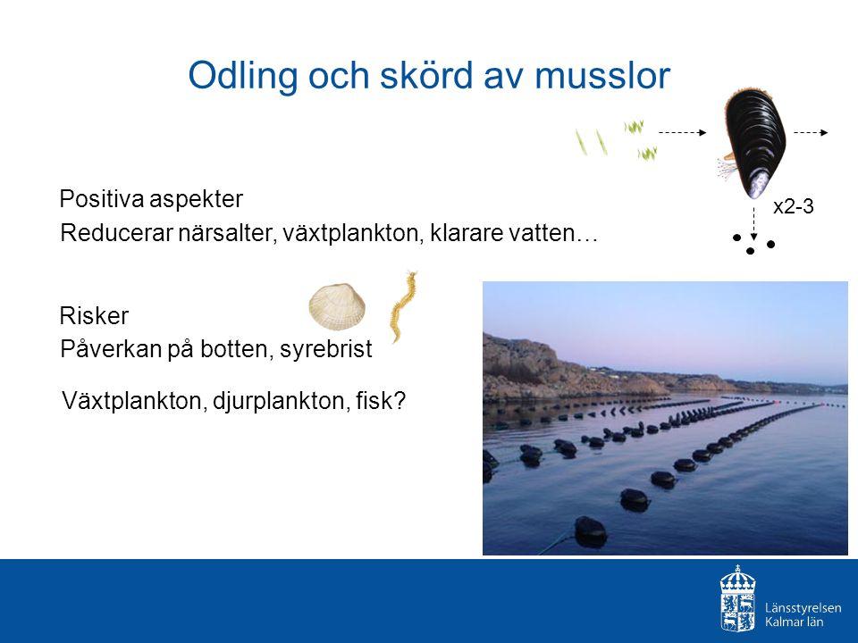 Odling och skörd av musslor