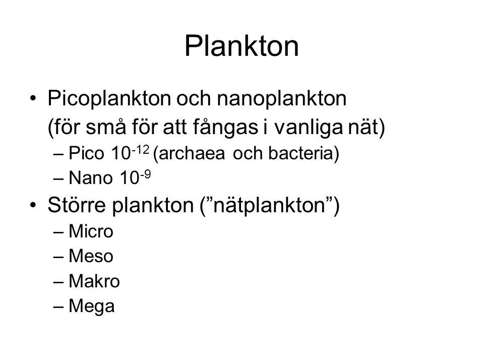 Plankton Picoplankton och nanoplankton