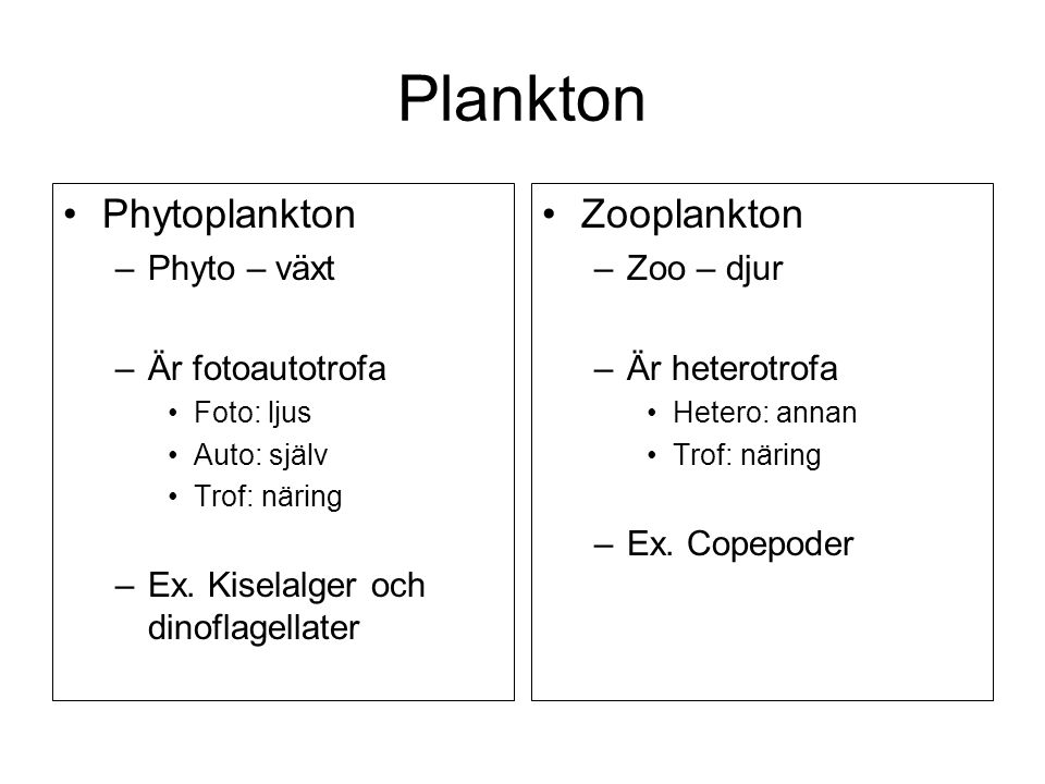 Plankton Phytoplankton Zooplankton Phyto – växt Är fotoautotrofa