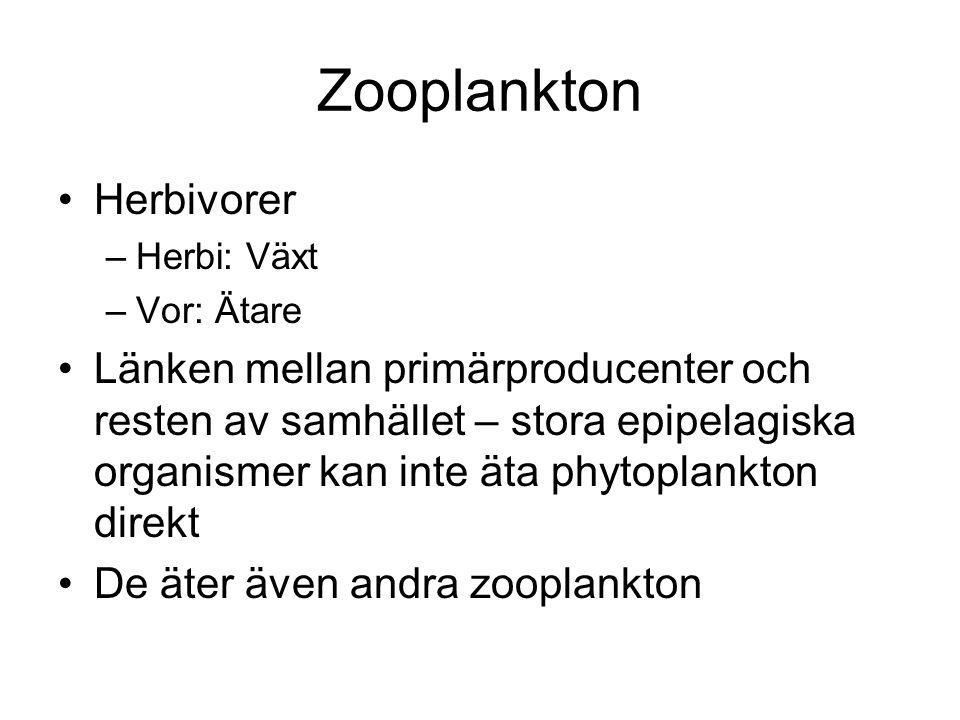 Zooplankton Herbivorer