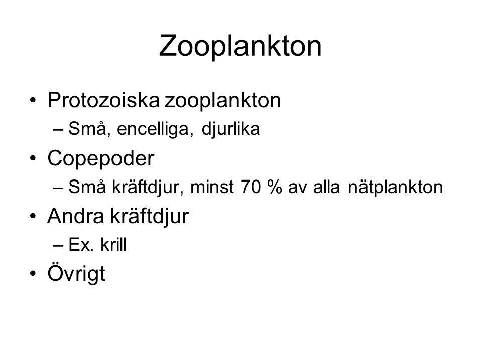 Zooplankton Protozoiska zooplankton Copepoder Andra kräftdjur Övrigt