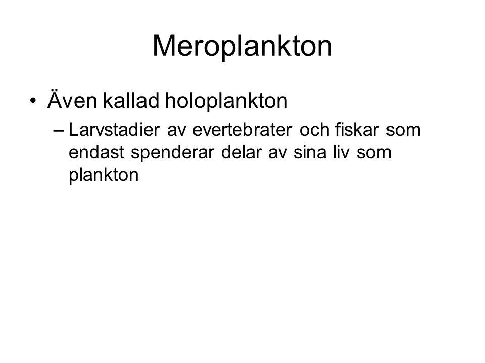 Meroplankton Även kallad holoplankton