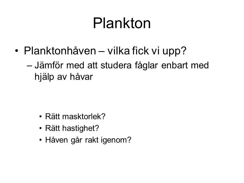 Plankton Planktonhåven – vilka fick vi upp