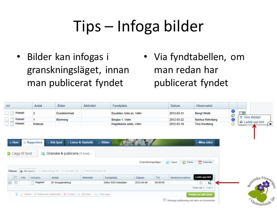 Tips – Infoga bilder Bilder kan infogas i granskningsläget, innan man publicerat fyndet.
