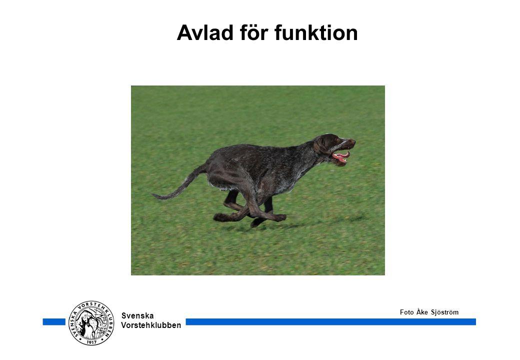 Avlad för funktion Foto Åke Sjöström