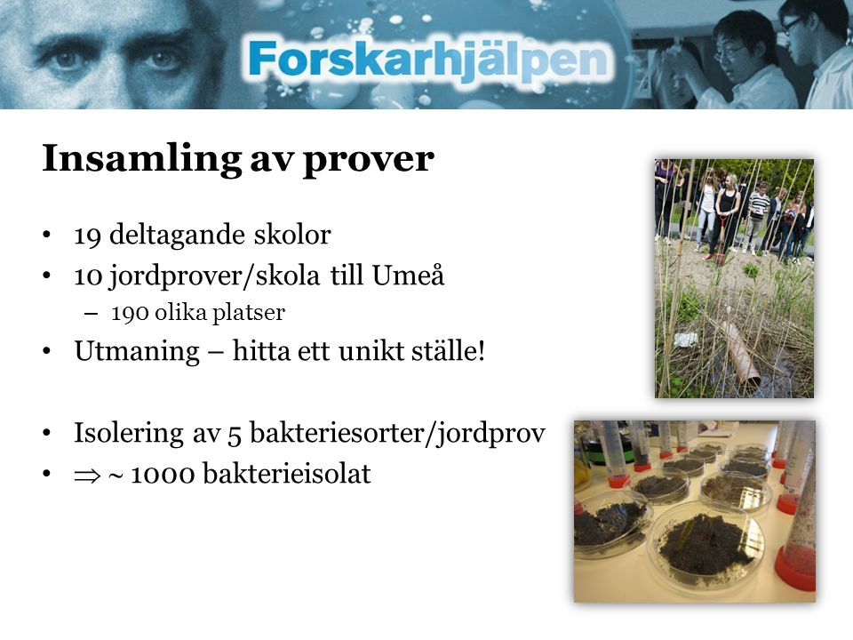 Insamling av prover 19 deltagande skolor 10 jordprover/skola till Umeå