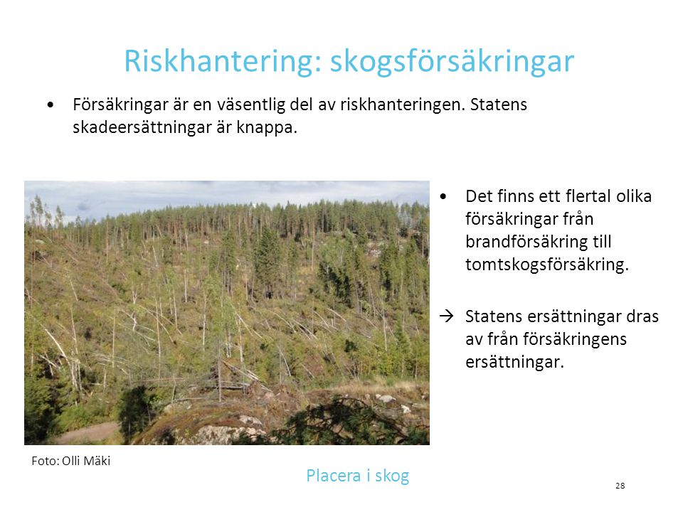 Riskhantering: skogsförsäkringar