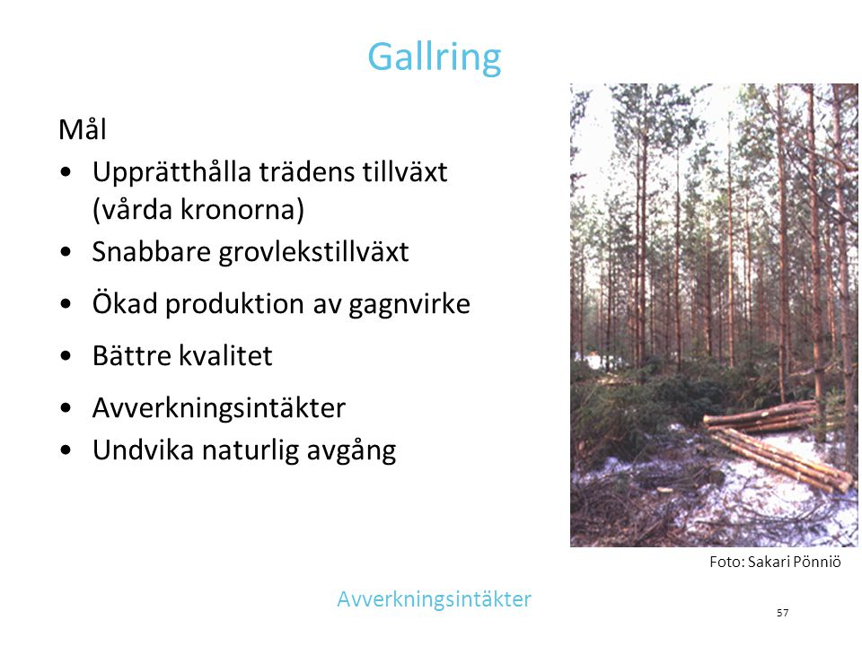 Gallring Mål Upprätthålla trädens tillväxt (vårda kronorna)
