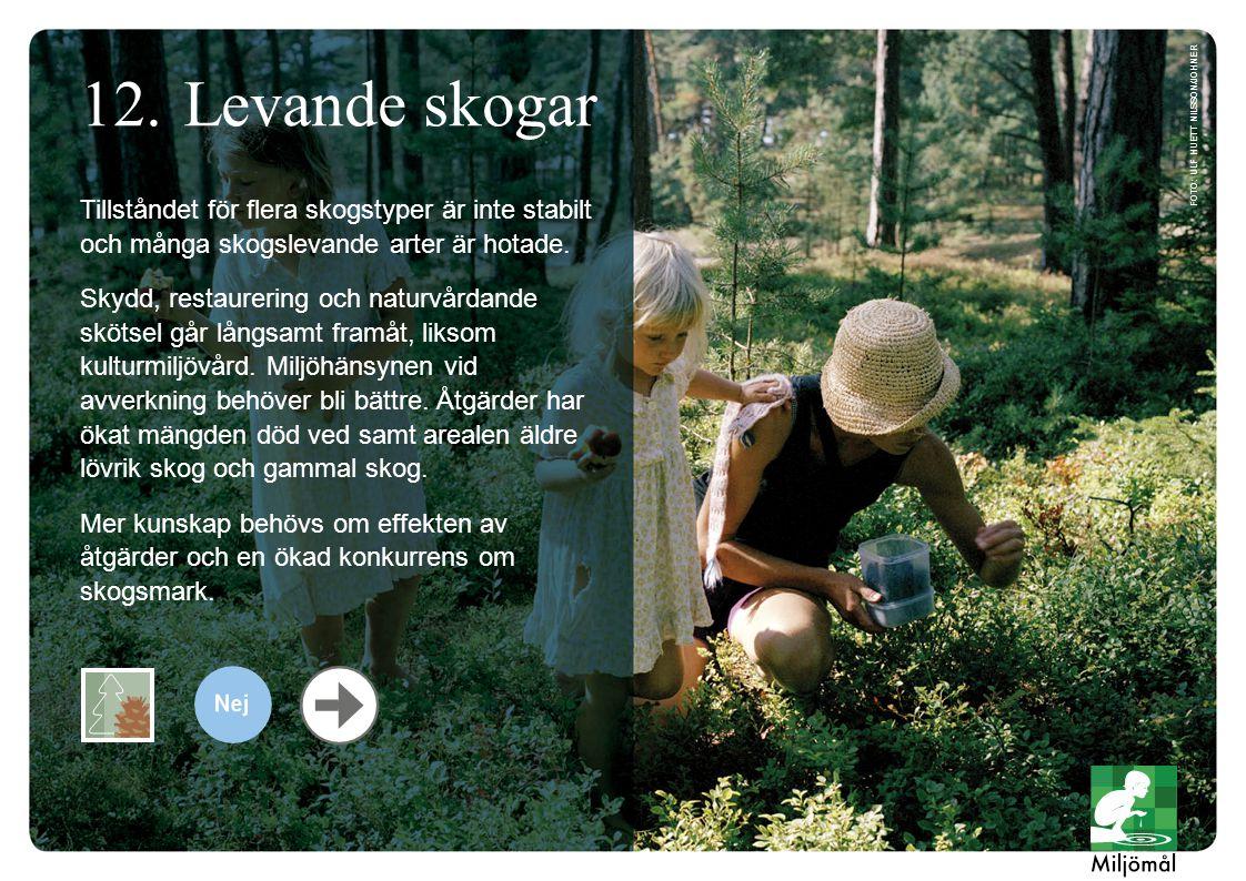 Levande skogar foto: Ulf Huett Nilsson/JOHNER. Tillståndet för flera skogstyper är inte stabilt och många skogslevande arter är hotade.