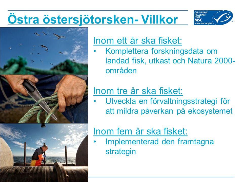 Östra östersjötorsken- Villkor