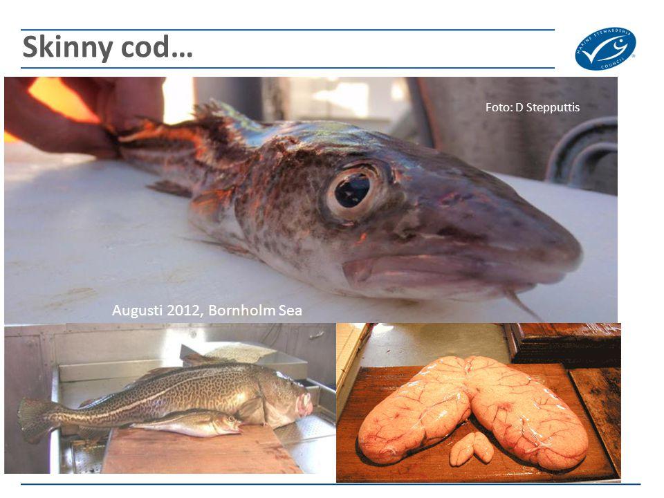 Skinny cod… Augusti 2012, Bornholm Sea Foto: D Stepputtis