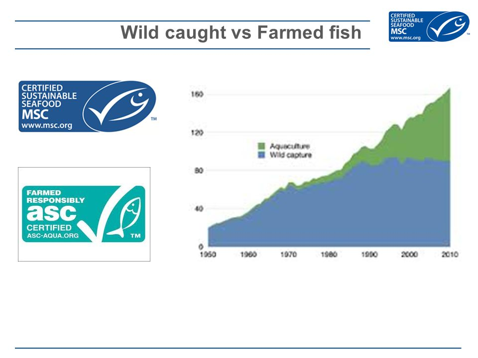 Wild caught vs Farmed fish