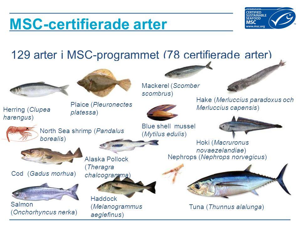 MSC-certifierade arter