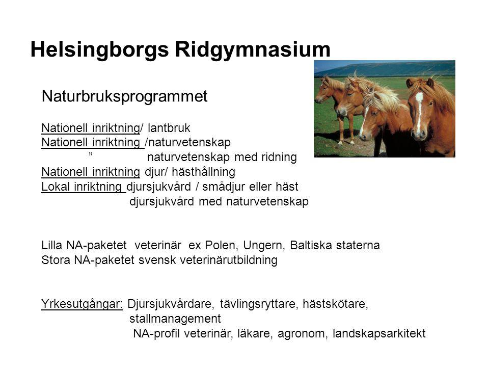 Helsingborgs Ridgymnasium