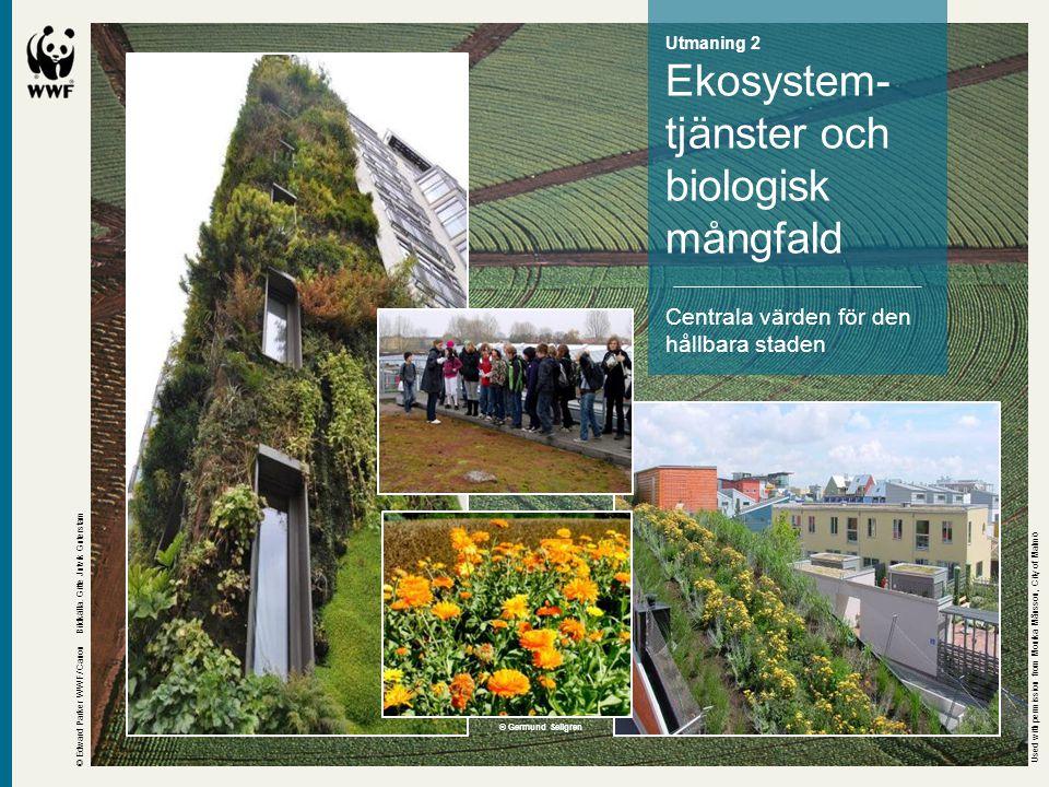 Ekosystem- tjänster och biologisk mångfald