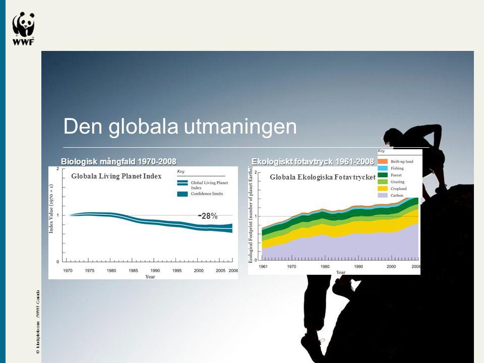 Living Planet Report WWFs globala miljöredovisning