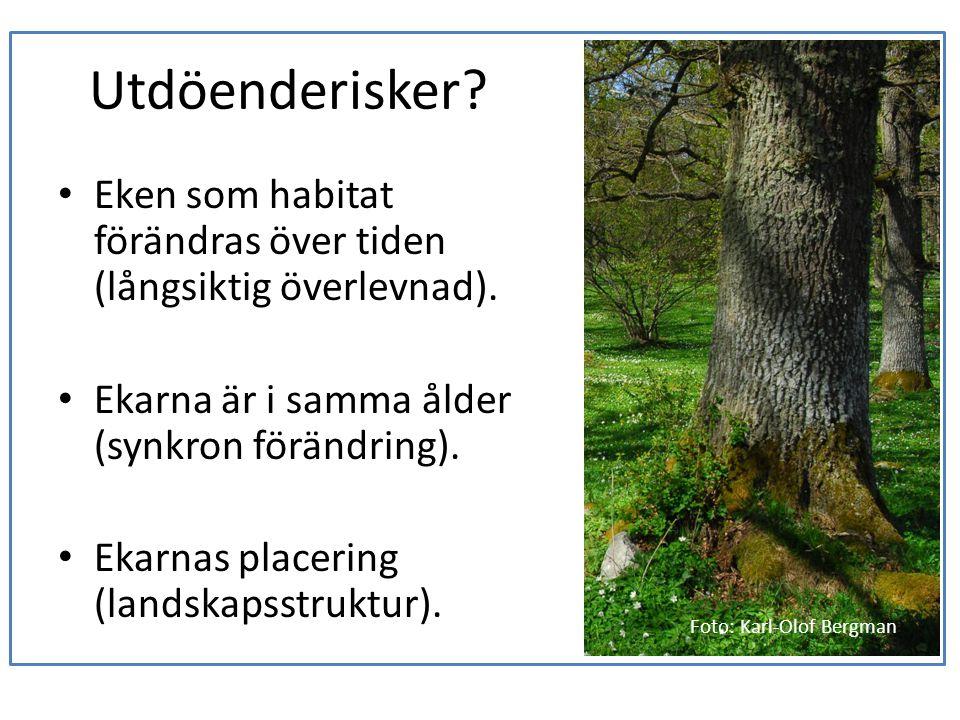 Utdöenderisker Eken som habitat förändras över tiden (långsiktig överlevnad). Ekarna är i samma ålder (synkron förändring).