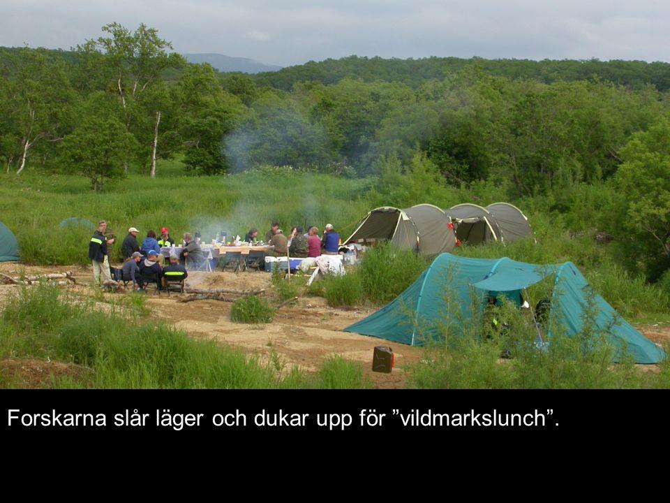 Forskarna slår läger och dukar upp för vildmarkslunch .