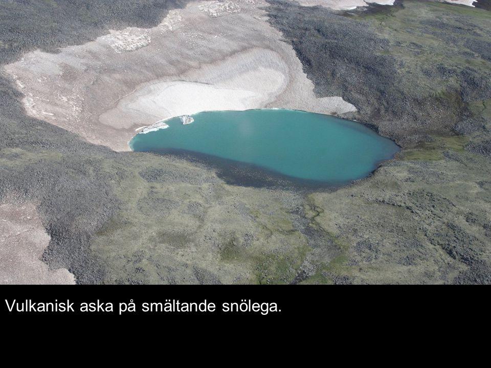 Vulkanisk aska på smältande snölega.