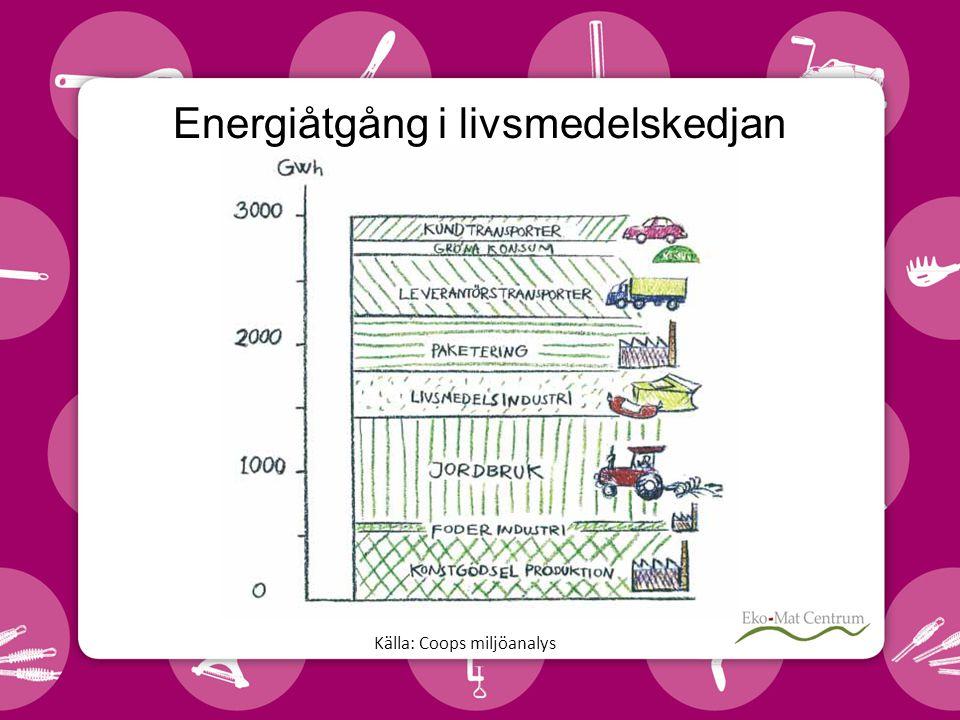 Energiåtgång i livsmedelskedjan
