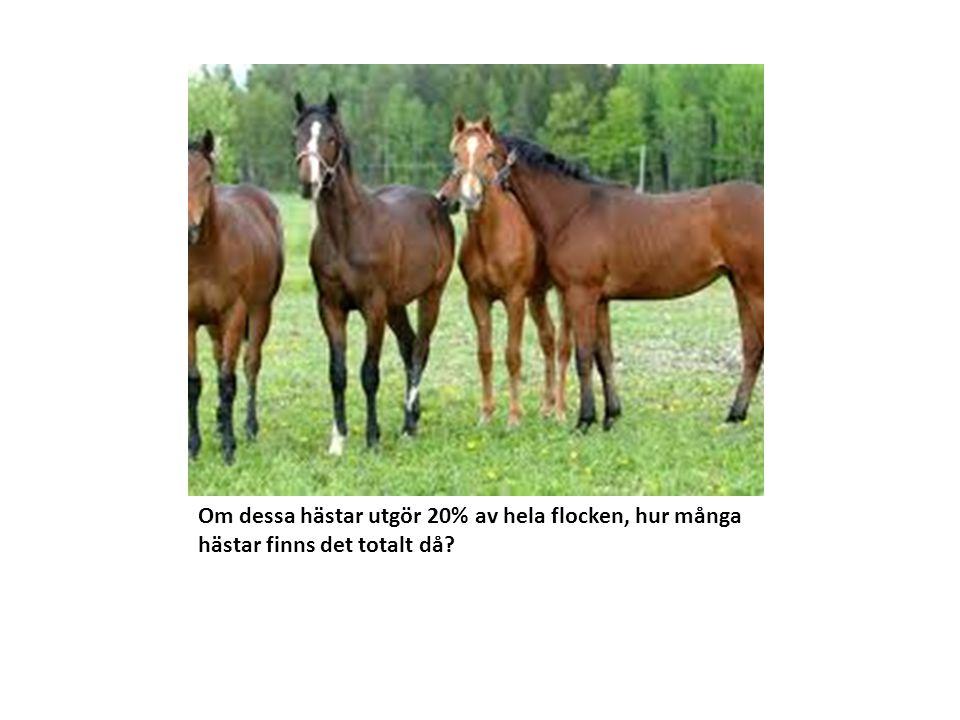 Om dessa hästar utgör 20% av hela flocken, hur många hästar finns det totalt då