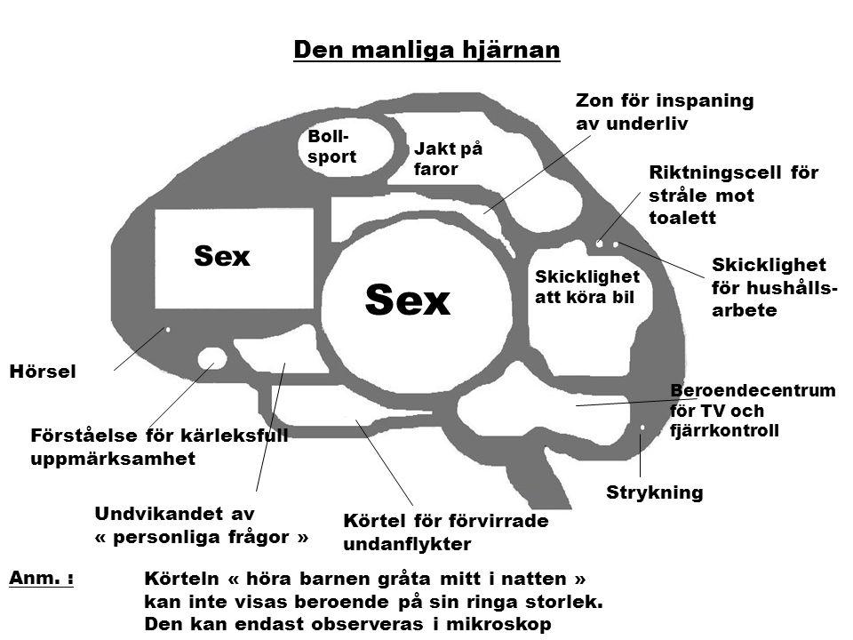 Sex Sex Den manliga hjärnan Zon för inspaning av underliv
