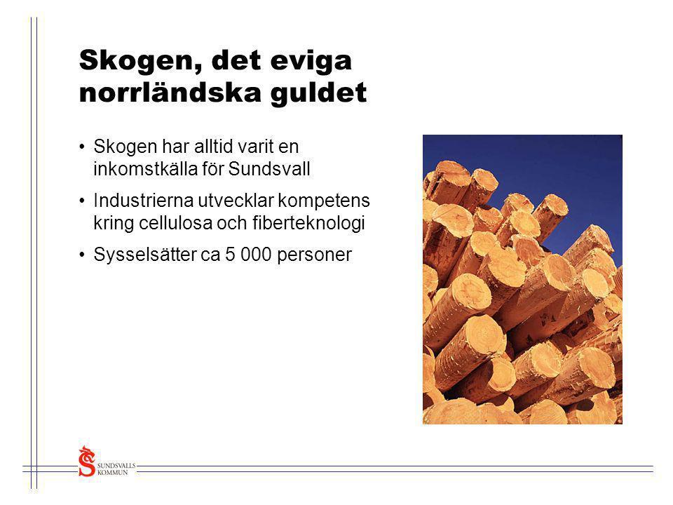 Skogen, det eviga norrländska guldet