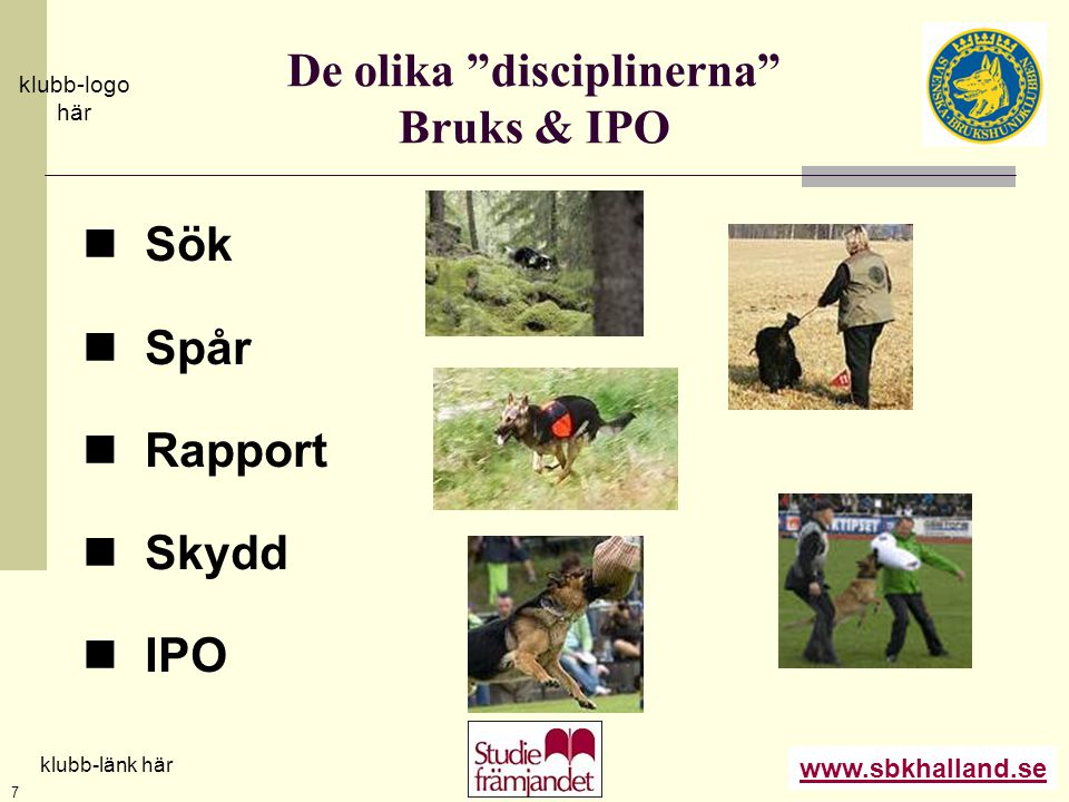 De olika disciplinerna Bruks & IPO