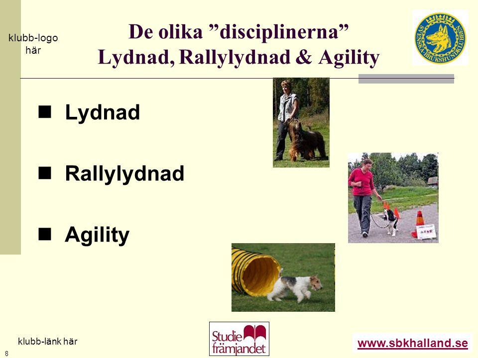 De olika disciplinerna Lydnad, Rallylydnad & Agility