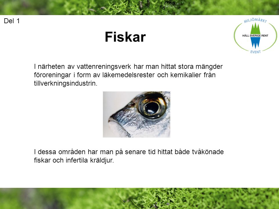 Del 1 Fiskar.