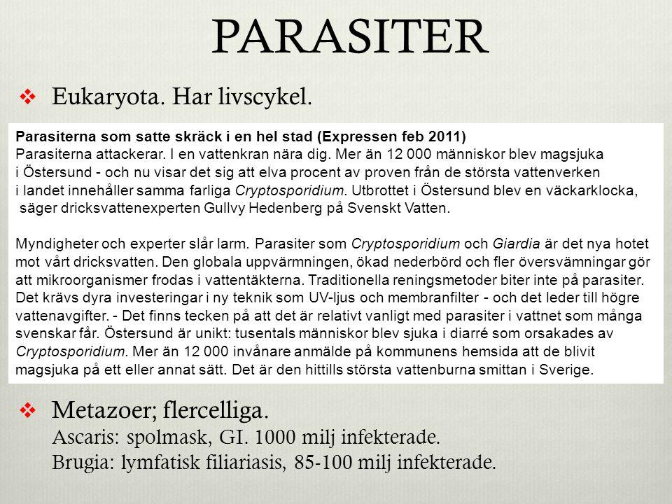 PARASITER Eukaryota. Har livscykel. Protozoer; encelliga.
