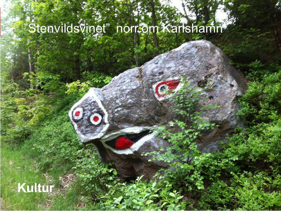 Stenvildsvinet norr om Karlshamn