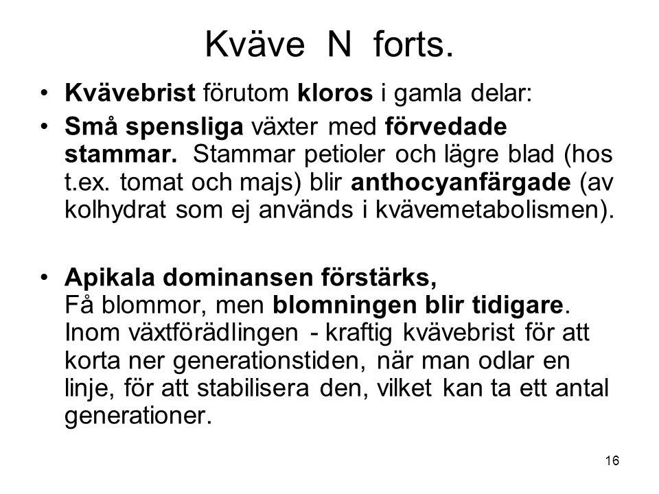 Kväve N forts. Kvävebrist förutom kloros i gamla delar: