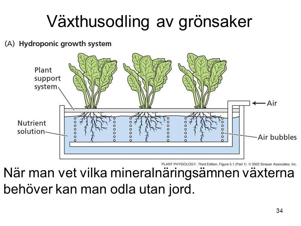 Växthusodling av grönsaker