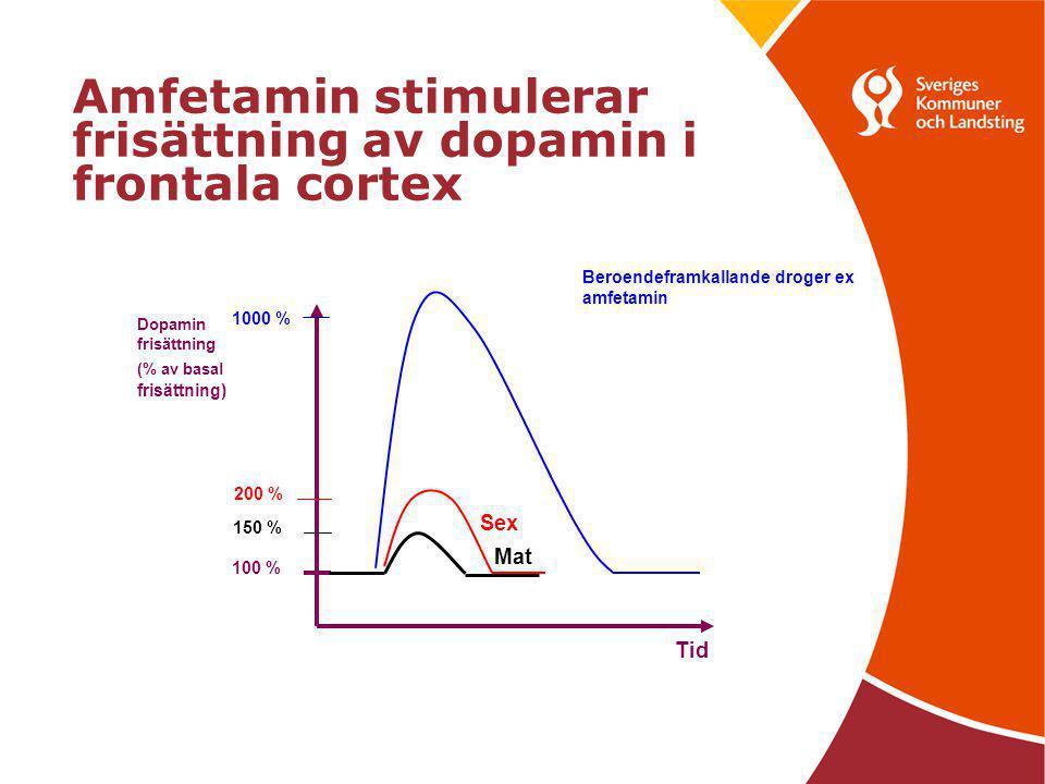 Amfetamin stimulerar frisättning av dopamin i frontala cortex