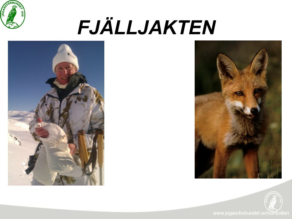 FJÄLLJAKTEN www.jagareforbundet.se/norrbotten INLÅST