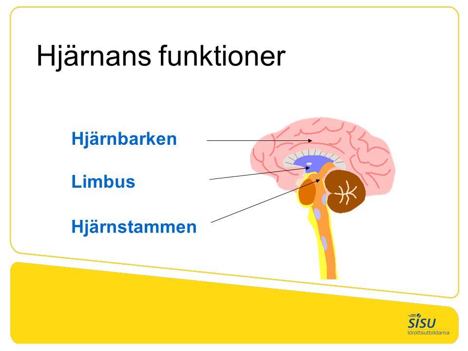 Hjärnans funktioner Hjärnbarken Limbus Hjärnstammen Tid: 2 min