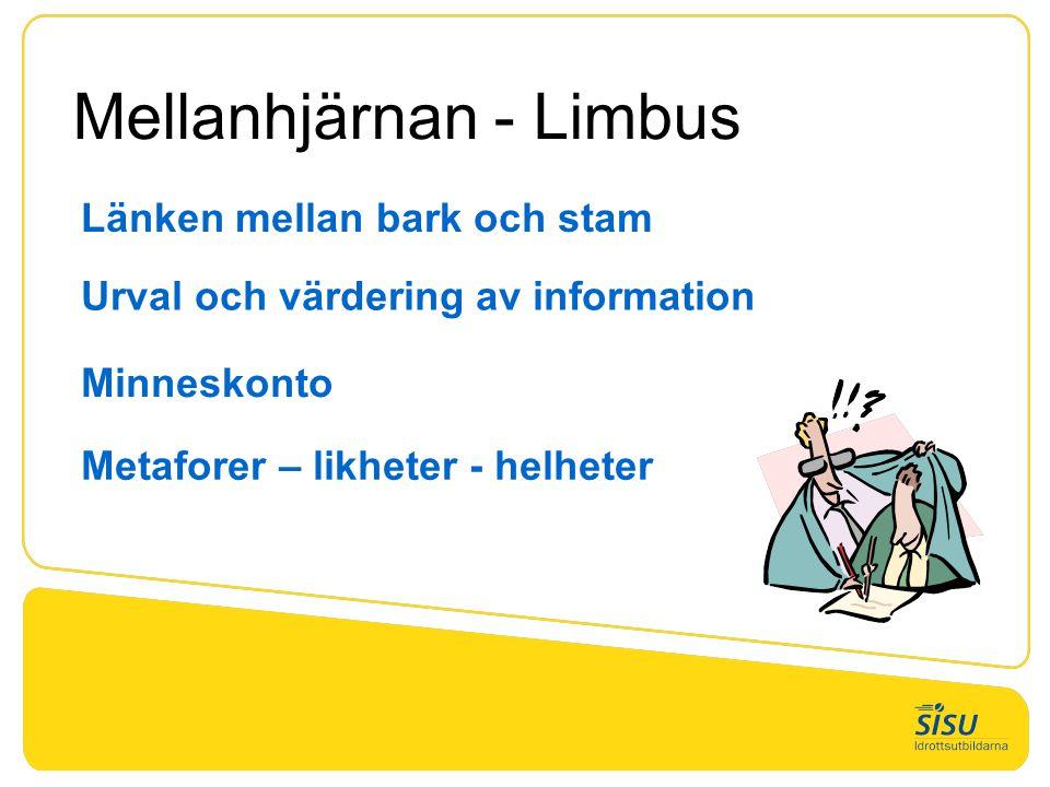 Mellanhjärnan - Limbus