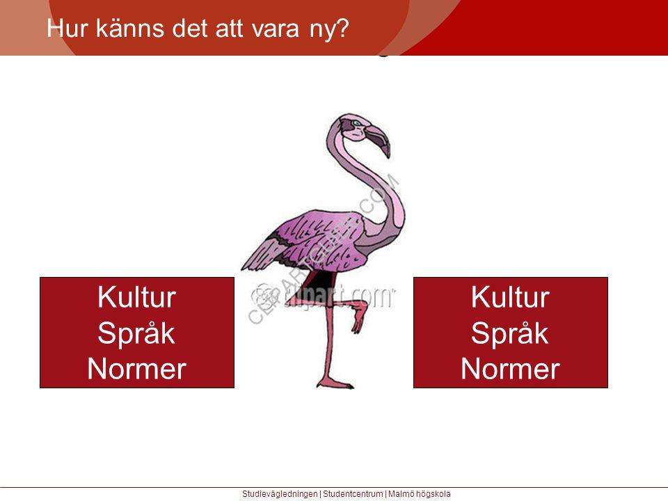 Större mångfald Kultur Språk Normer Kultur Språk Normer