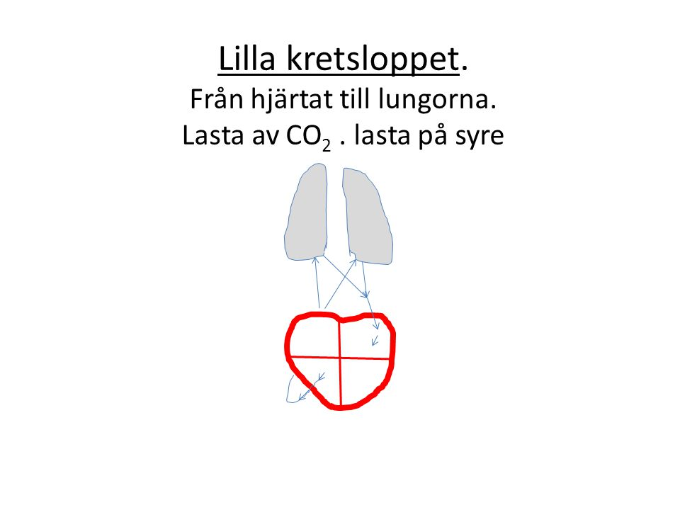 Lilla kretsloppet. Från hjärtat till lungorna. Lasta av CO2
