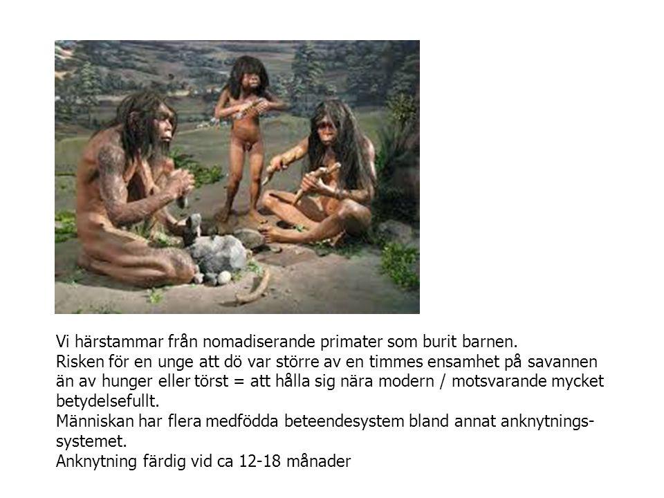 Vi härstammar från nomadiserande primater som burit barnen