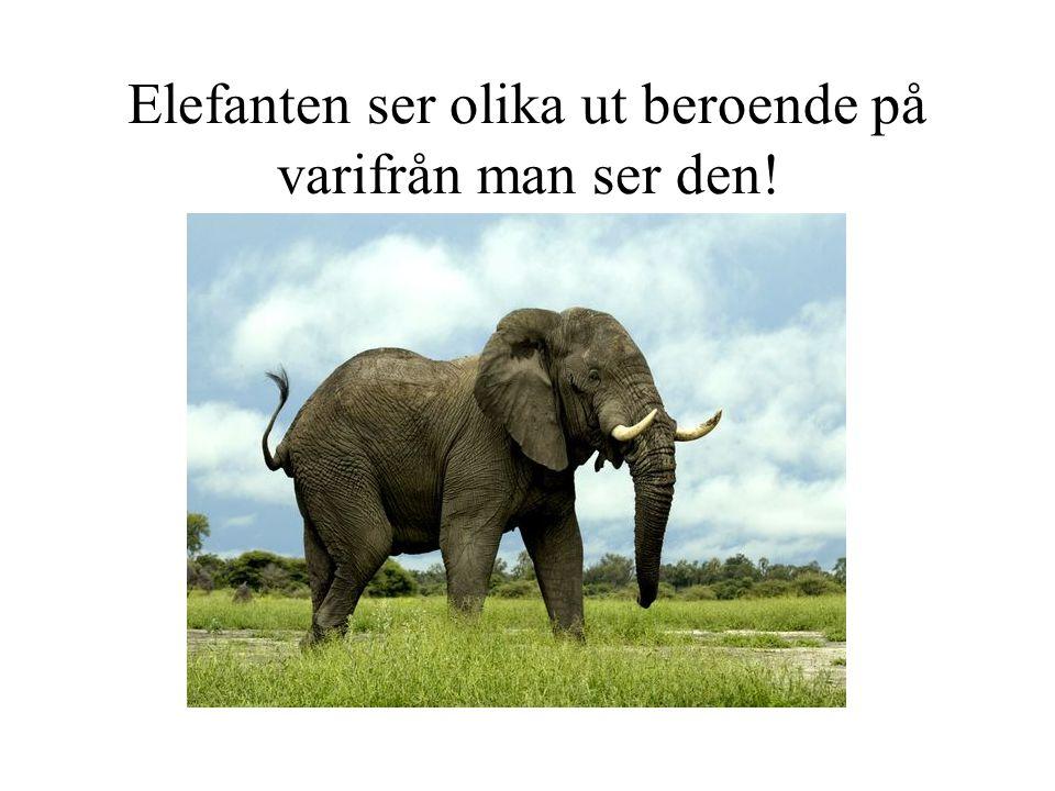 Elefanten ser olika ut beroende på varifrån man ser den!