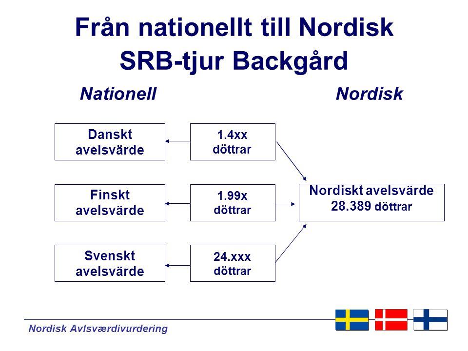 Från nationellt till Nordisk SRB-tjur Backgård