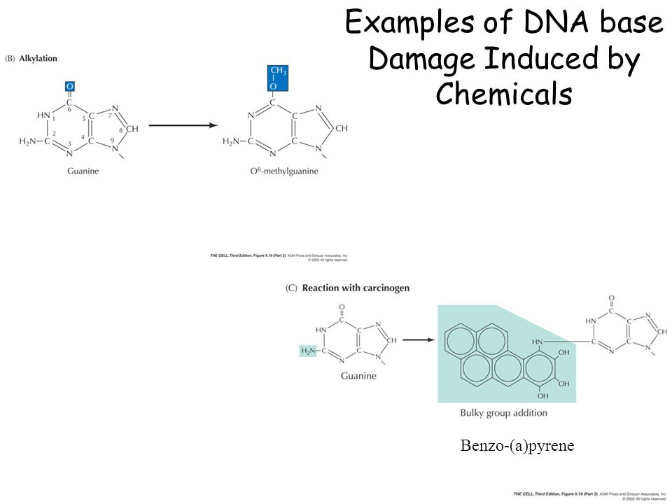 Examples of DNA base Damage Induced by Chemicals