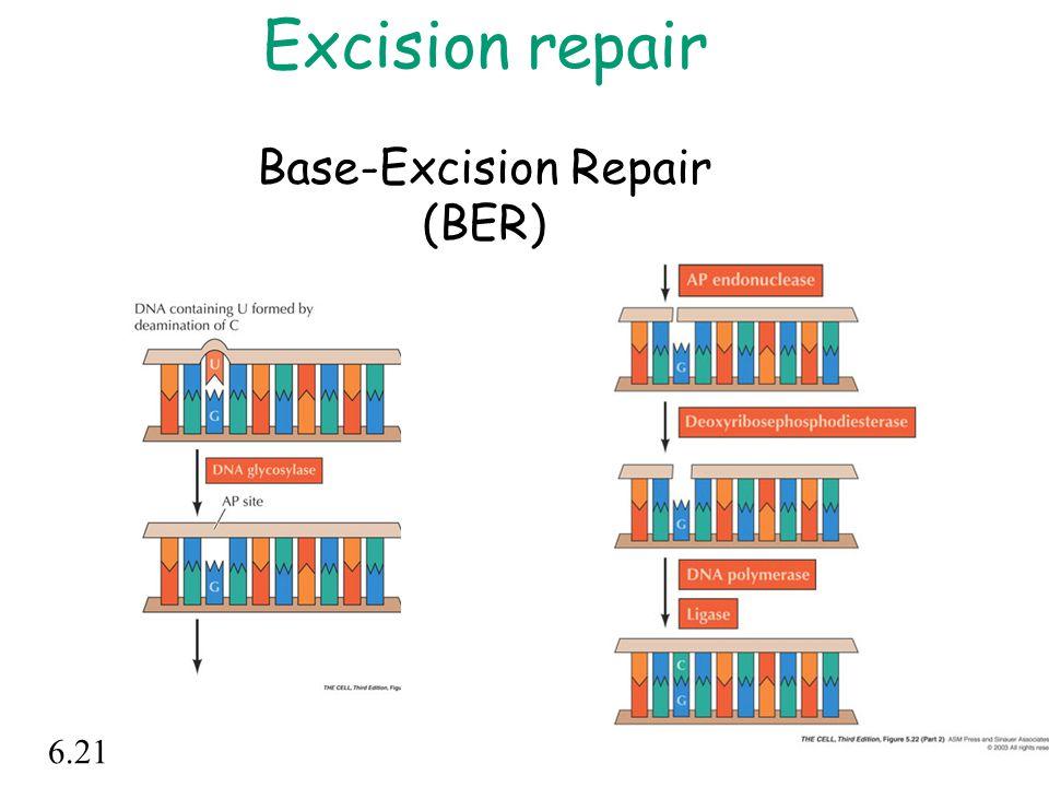 Excision repair Base-Excision Repair (BER)