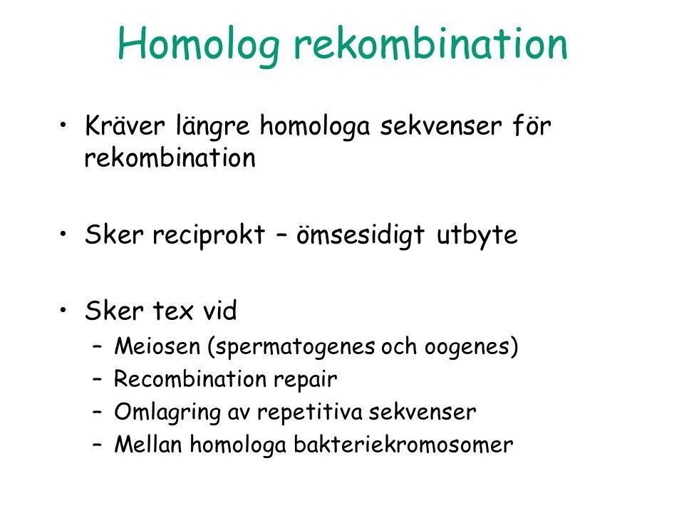 Homolog rekombination